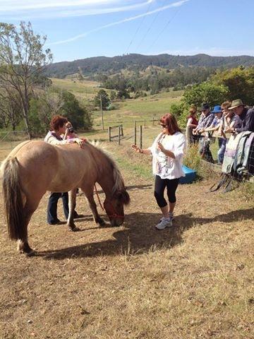 animal healing horse